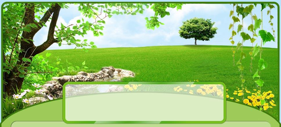 http://disainov.ucoz.net/grafics/zelen/-.jpg